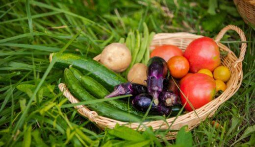 「家計向上」のための家庭菜園!~プランター菜園版・夏野菜①~