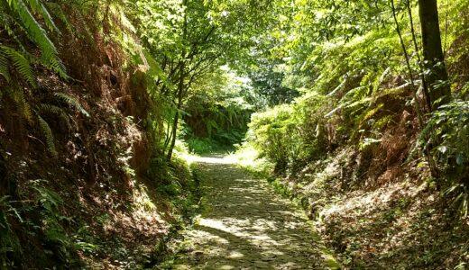 「緑の癒しのシャワー!」7月の浜北森林公園